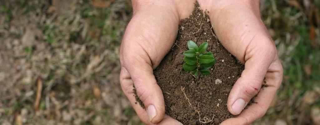 handful-of-dirt-5-1400892